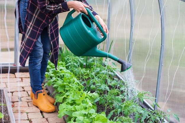 Kobieta podlewa rośliny w szklarni