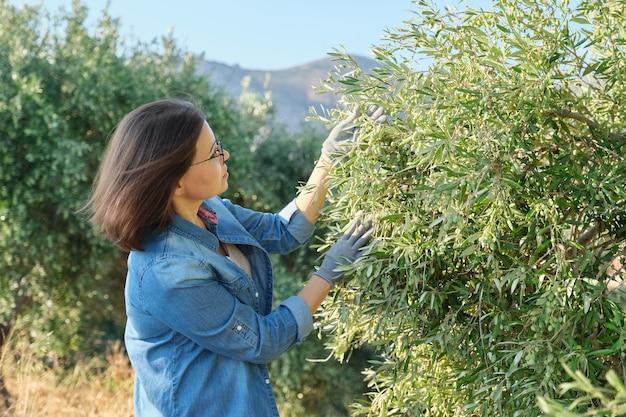 Kobieta pracująca w ogrodzie oliwnym, przestrzeń górska, słoneczny jesienny dzień