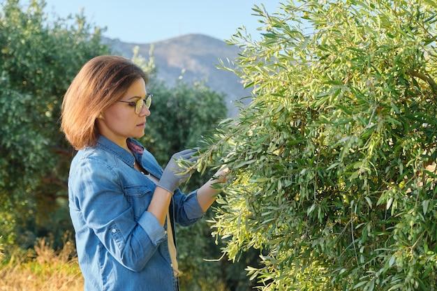 Kobieta pracująca w ogrodzie oliwnym