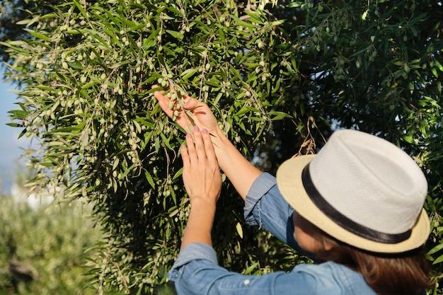 Kobieta pracująca w słonecznym ogrodzie oliwnym,