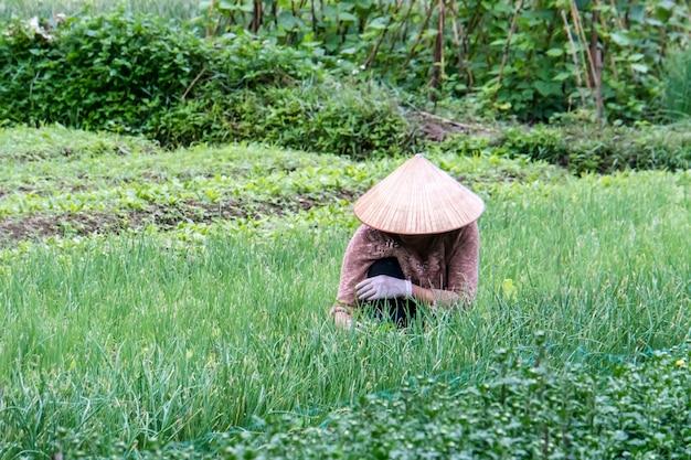 Kobieta pracuje na plantacji roślin. ciężka ręczna obróbka ziemi. wietnam. wyspa cat ba.