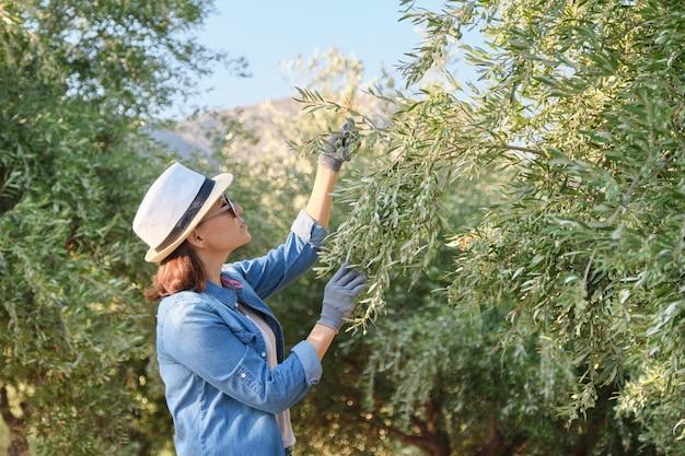 Kobieta pracuje w oliwnym ogródzie, halny tło