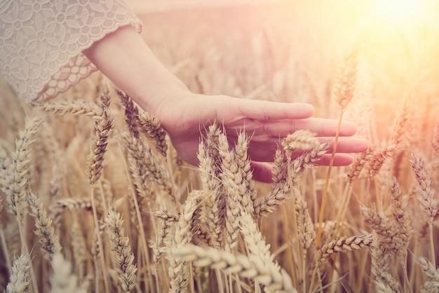 Kobieta przekazuje pole pszenicy, czas letni. koncepcja zbiorów