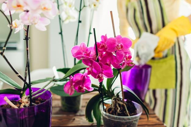 Kobieta przesadzająca orchideę do innego garnka w kuchni. gospodyni zajmująca się domowymi roślinami i kwiatami. prace ogrodowe