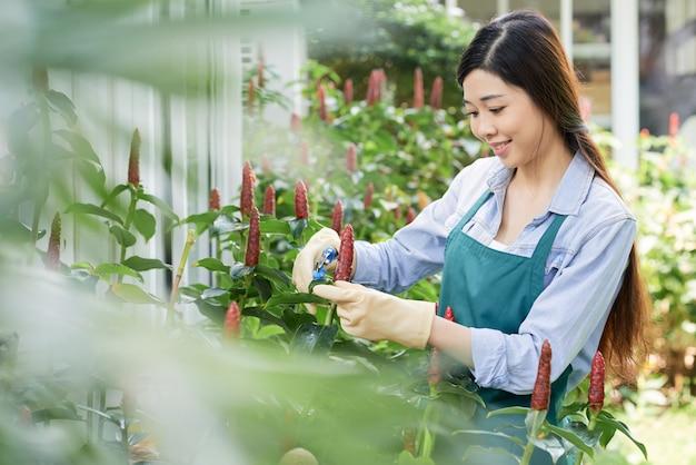 Kobieta przycinanie roślin