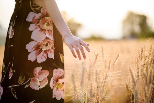Kobieta ręką dotykając dojrzałe złote kłosy jęczmienia lub pszenicy o zachodzie słońca