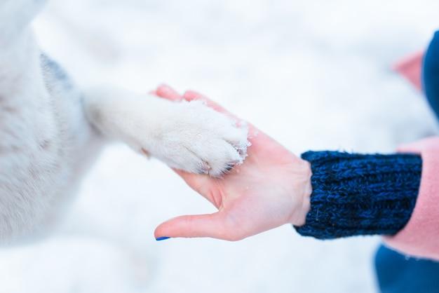 Kobieta ręka trzyma łapa psa husky widok zbliżenie.