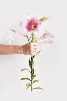 Kobieta ręka trzyma różową lilię. pionowa kreatywna kartka z życzeniami na dzień matki.