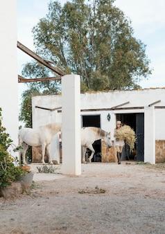 Kobieta rolnik niosąca siano dla swoich koni