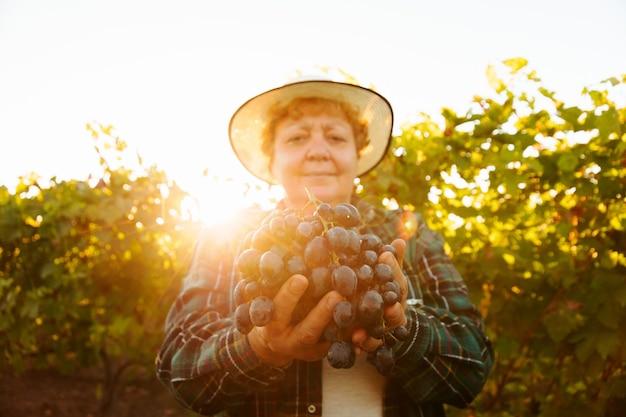 Kobieta rolnik w kapeluszu pokazuje duże czerwone winogrona patrząc na kamerę starsza kobieta w winnicy z...