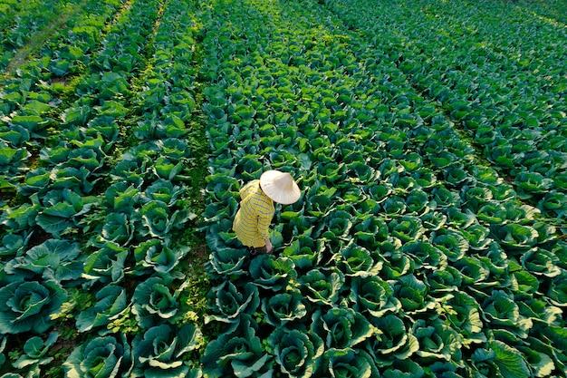Kobieta rolnik w słomkowym kapeluszu zajmuje się ogrodnictwem i działalnością rolniczą na polu warzyw kapusta
