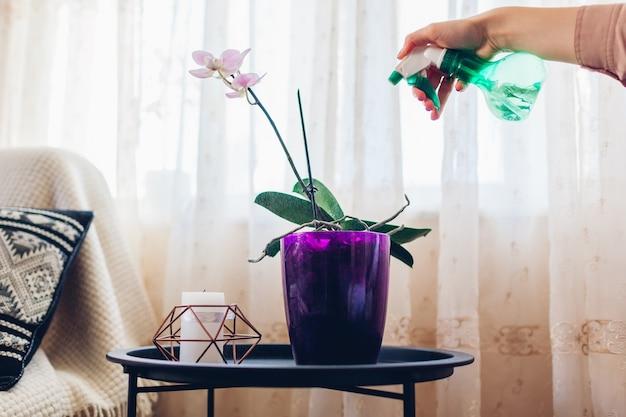 Kobieta rozpylanie wody na orchidei w salonie. gospodyni domowa opiekująca się roślinami domowymi i kwiatami na kwarantannie. wnętrze. hobby