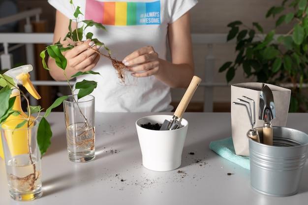 Kobieta sadząca rośliny domowe w domu. koncepcja pielęgnacji roślin