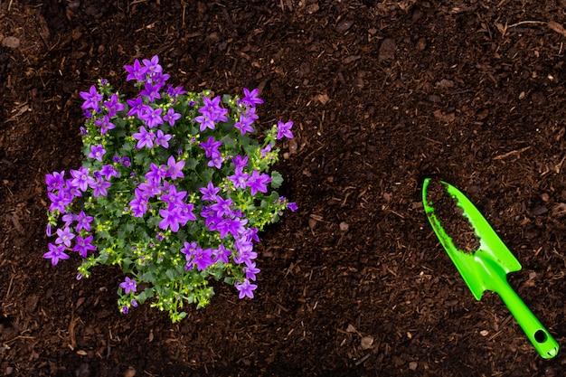 Kobieta sadzenia młodych sadzonek sałaty w ogrodzie warzywnym