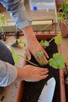 Kobieta sadzenia warzyw w domu z łopatą