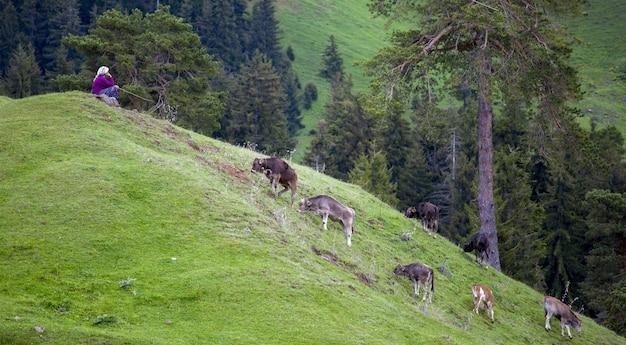 Kobieta siedzi na wzgórzu porośniętym zielenią w otoczeniu pasących się krów w ciągu dnia