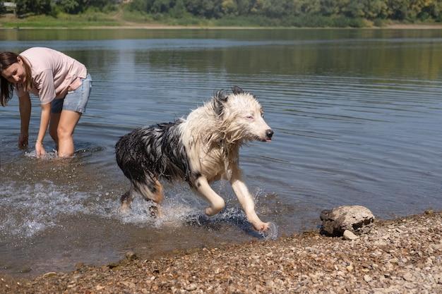 Kobieta splash, bawić się szalonym mokrym psem owczarka australijskiego blue merle w rzece, lato. pies ucieka. baw się ze zwierzętami na plaży. podróżuj ze zwierzętami.