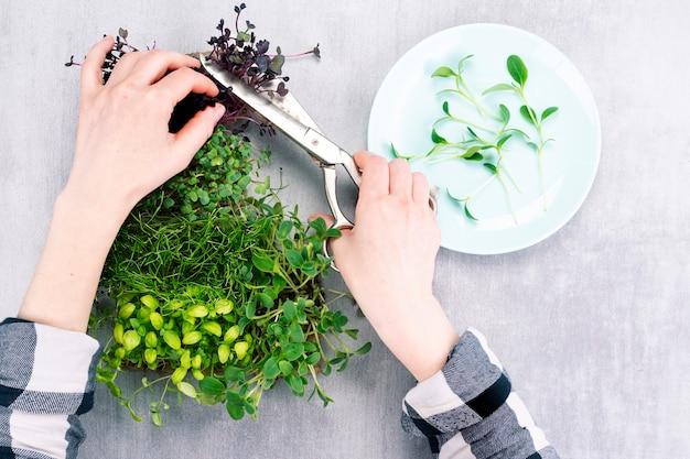 Kobieta tnie zieloną roślinę z własnego ogródka i umieszcza na talerzu mikrozielone kiełki