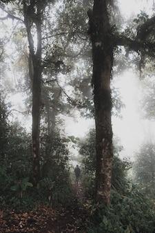 Kobieta trekkingowa w dżungli lasów tropikalnych