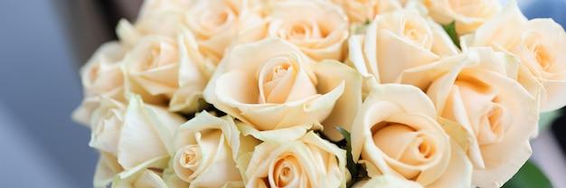 Kobieta trzyma duży piękny bukiet białych róż zbliżenie