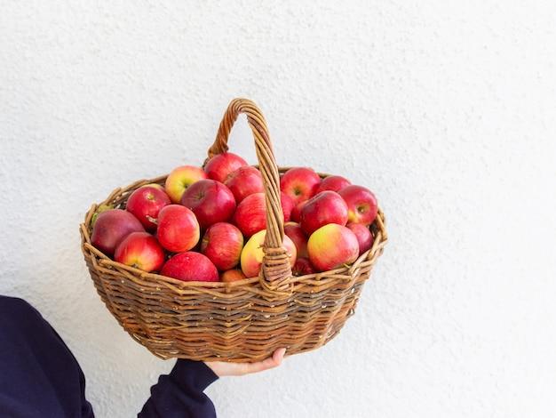 Kobieta trzyma duży wiklinowy kosz z czerwonymi i żółtymi jabłkami na tle białej ściany, świeże zbiory z ogrodu
