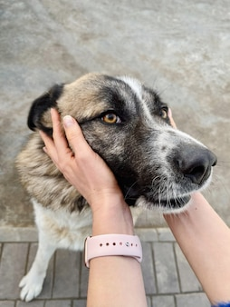 Kobieta trzyma głowę psa w dłoniach