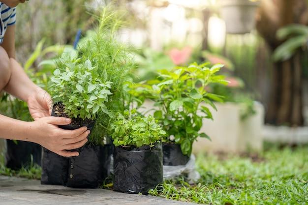 Kobieta trzyma się za ręce rośliny warzyw i przygotowuje się do rośliny w ogrodzie