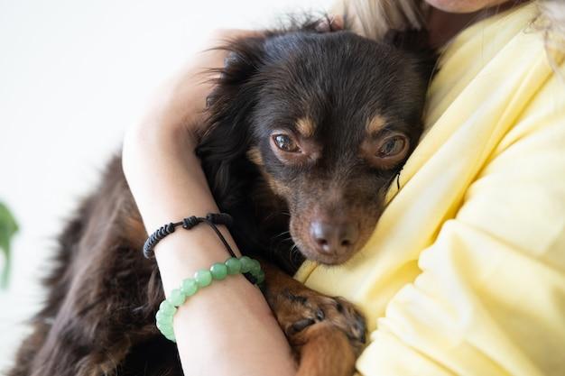 Kobieta trzyma smutny brązowy rosyjski toy terrier. koncepcja opieki nad zwierzętami. miłość i przyjaźń. bezdomny. przyjąć. schronienie.