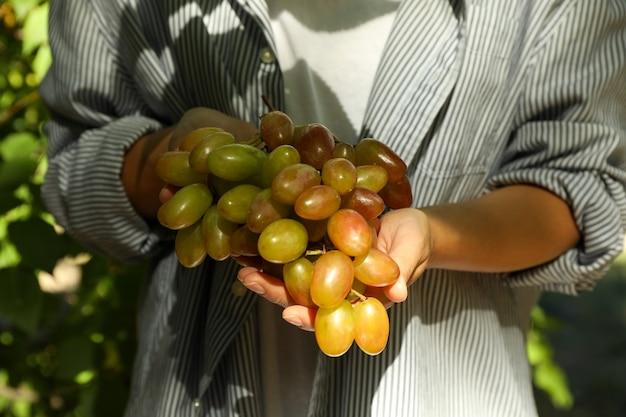 Kobieta trzyma świeże dojrzałe winogrona na zewnątrz przed drzewami