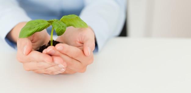 Kobieta trzyma trochę roślin