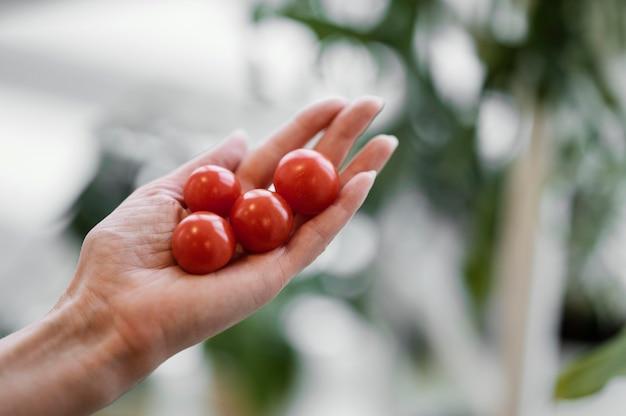 Kobieta trzyma w dłoni uprawiane pomidory