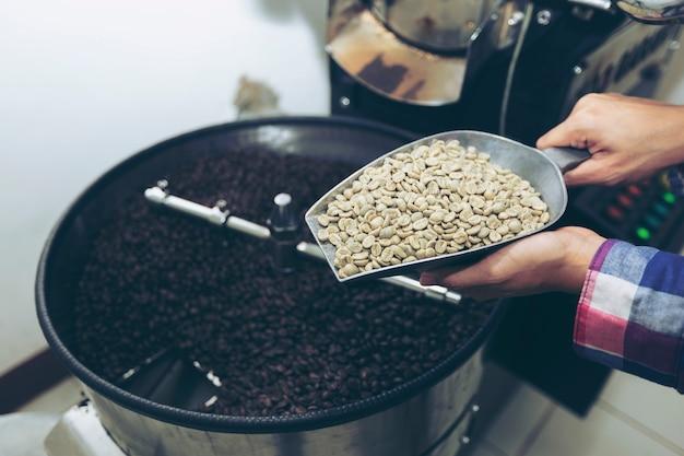 Kobieta trzyma ziarna kawy przed pieczeniem na rękach, sprawdzając różne jakości fizyczne.