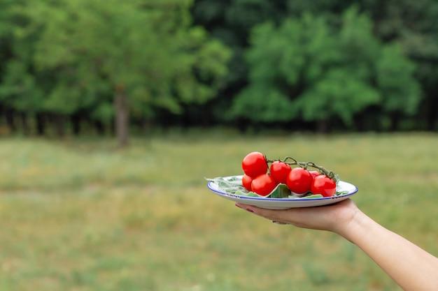 Kobieta trzymać talerz ze świeżych pomidorów. talerz warzyw na piknik w lesie