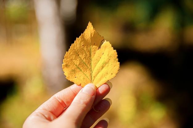 Kobieta trzymając się za ręce żółty liść