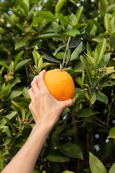 Kobieta trzymająca pomarańczę w dłoni