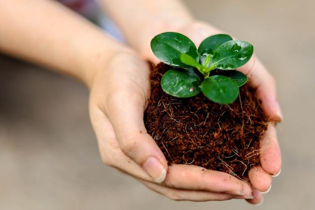 Kobieta trzymająca sadzonkę obiema rękami, sadzenie drzew pomoże zmniejszyć globalne ocieplenie. i dodaj tlen do naszego świata, koncepcję zmniejszenia globalnego ocieplenia.