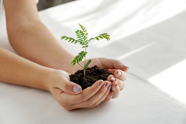 Kobieta trzymająca zieloną roślinę w dłoni. zamyka w górę ręki trzyma młoda świeża flanca. niewielka głębokość pola, z naciskiem na sadzonki.