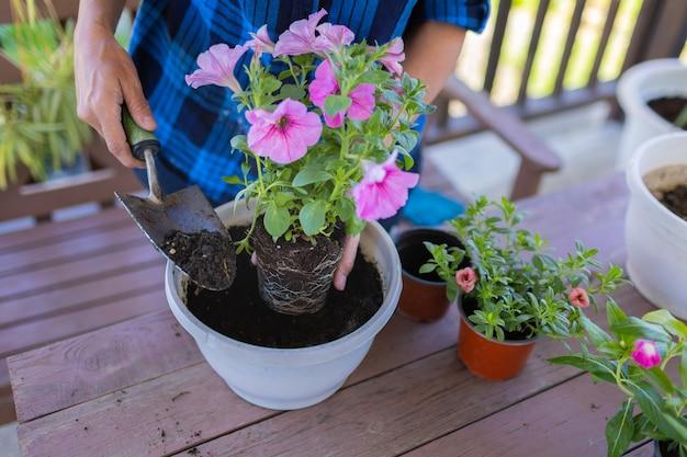Kobieta w domu na poddaszu rośliny piękne kwiaty w doniczkach. dba o rośliny. zmienia ziemię.