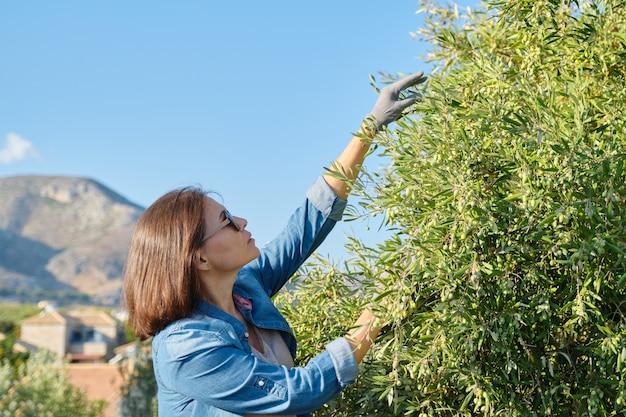 Kobieta w gaju oliwnym