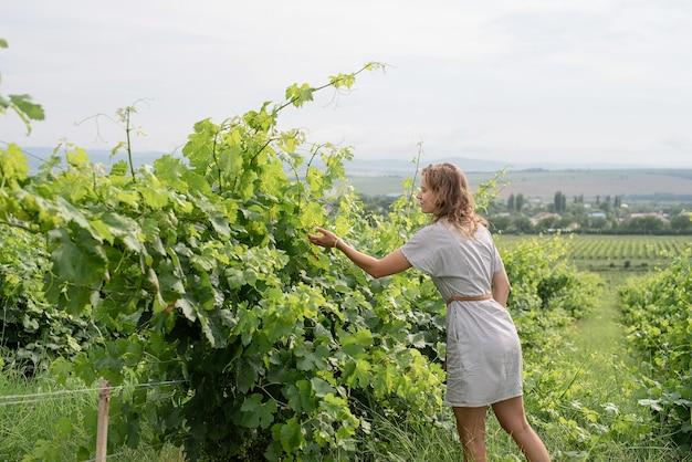 Kobieta W Letniej Sukience Spacerująca Po Winnicy Pachnąca Winogronami Premium Zdjęcia