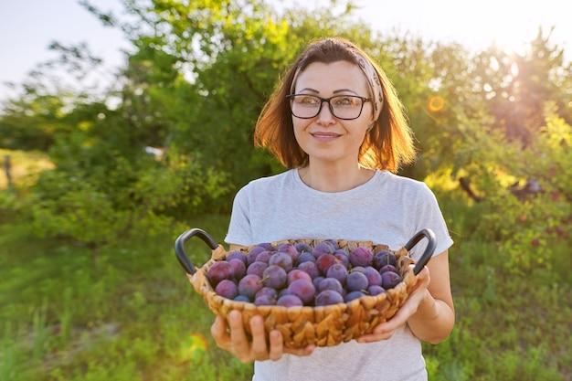 Kobieta w ogrodzie z koszem śliwek. zbiór świeżych zerwanych owoców, dojrzałych niebieskich śliwek. hobby, ogrodnictwo, uprawa ekologicznych owoców w przydomowym ogrodzie, zdrowa naturalna żywność