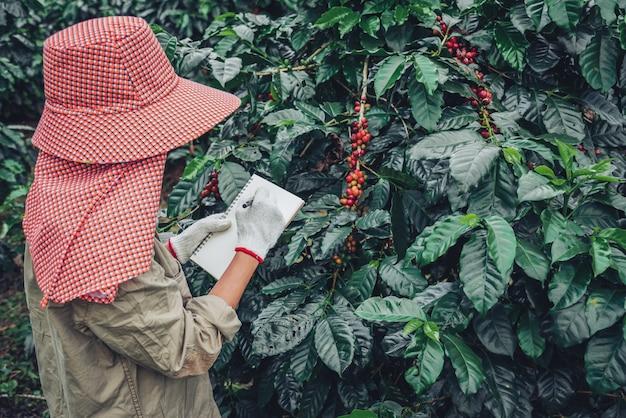 Kobieta w ręku trzyma notatnik i stoi blisko drzewa kawowego, ucząc się o kawie