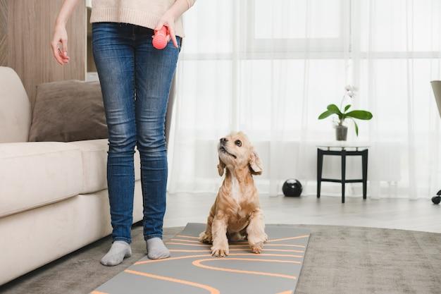 Kobieta w swobodnych dżinsach, bez twarzy, bawi się cocker spanielem i gumową różową zabawką we wnętrzu domu, szkolenie zwierząt domowych
