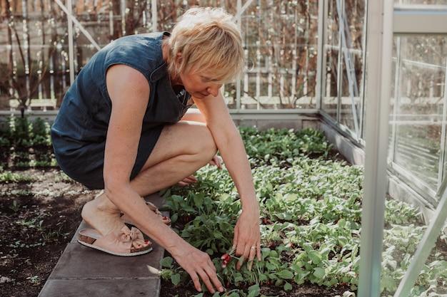 Kobieta w wieku 55 lat w wolnym czasie zajmuje się swoim małym ogródkiem warzywnym