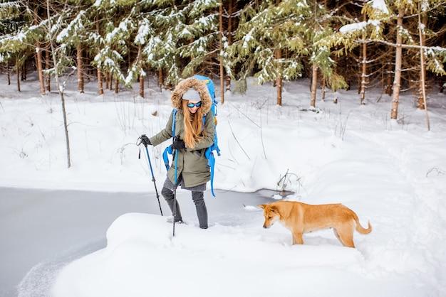 Kobieta w zimowych ubraniach z psem wędruje z plecakiem i kijami śledzącymi w zaśnieżonym lesie w pobliżu zamarzniętego jeziora