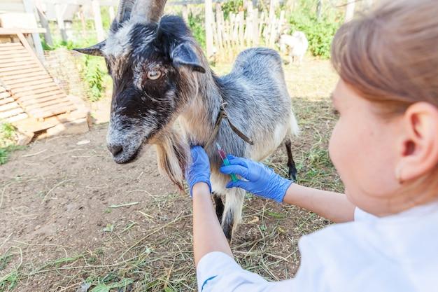 Kobieta weterynarz z strzykawką trzymającą i wstrzykującą kozę na tle ranczo młoda koza z weterynarzem...