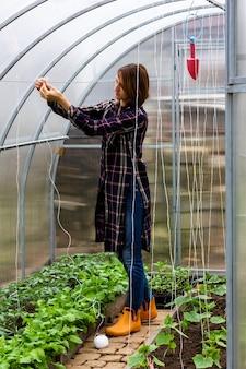 Kobieta wiążąca krzaki pomidorów linami