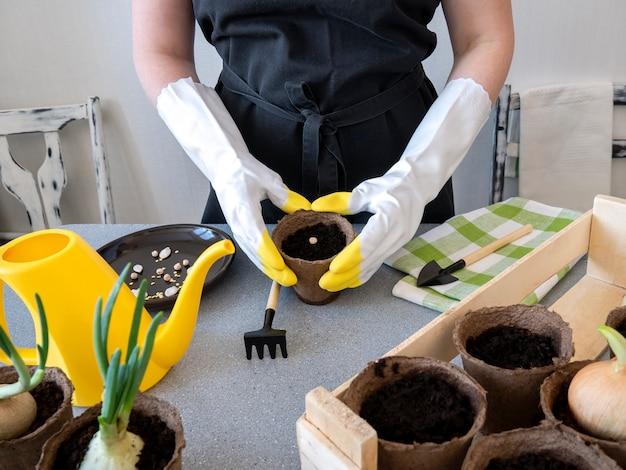 Kobieta własnymi rękami sadzi nasiona warzyw w małych doniczkach