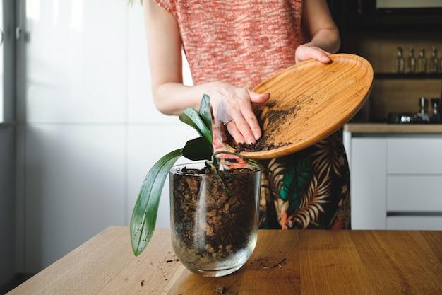 Kobieta wręcza zasadzać kwiatu w domu