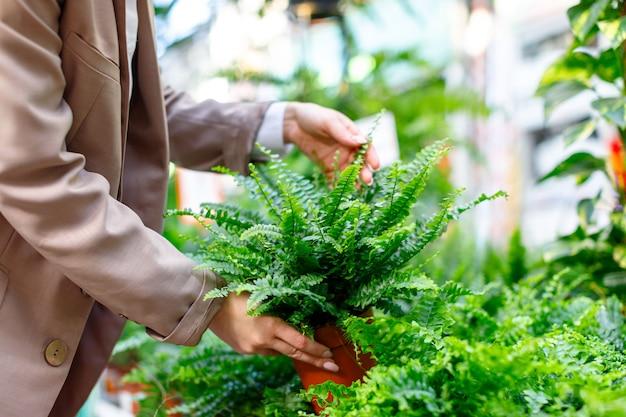 Kobieta wybiera rośliny doniczkowe. paproć nephrolepis dla jej domu / mieszkania w szklarni lub kwiaciarni, selektywna miękka ostrość.